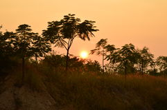 Sunset. Clicked with trees around it evening original click of Royalty Free Stock Photos
