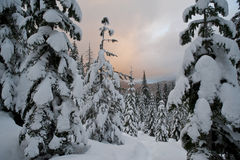 Sunset clouds above a winter forest Stock Images