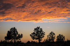 Sunset Clouds And Trees Royalty Free Stock Photo