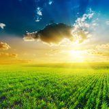 Sunset in clouds and green field Royalty Free Stock Image