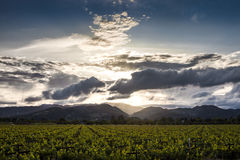 Sunset through clouds over Napa Valley vineyard Royalty Free Stock Image