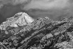 Sunset Clouds Over Snowy Pines. Black and white of the Wasatch mountains in Utah USA Royalty Free Stock Photos