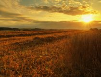 The sunset cloudy orange sky background. Setting sun rays on horizon in rural meadow.  Royalty Free Stock Image
