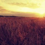 The sunset cloudy orange sky background. Setting sun rays on horizon in rural meadow. Stock Photos