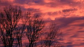 Sunset with cloudy red sky and silhouette, tree, october stock video footage