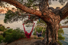 Sunset on the coast. Amazing sunset on a rocky hill in a quiet place by the sea. Two hammock under a tree Royalty Free Stock Image