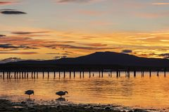 Sunset on the coast of Puerto Natales two ducks on the lake stock images