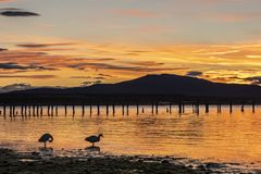 Sunset on the coast of Puerto Natales royalty free stock image