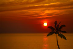 Sunset and Coconut Royalty Free Stock Photography