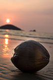 Sunset and coconut. At Thailands Beach Stock Image