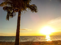Sunset and coconut Stock Image
