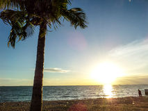 Sunset and coconut Royalty Free Stock Photos