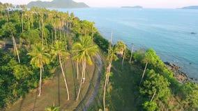 Sunset at coconut Palm Trees Plantation on Phuket Island. Tropical HD aerial birds-eye scene view. Thailand. Golden sunset at coconut Palm Trees Plantation on stock footage