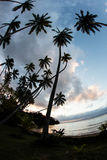 Sunset and Coconut Palms in Fiji Stock Photography