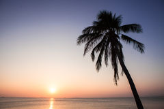 Sunset coconut tree Stock Photography