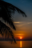 Sunset coconut tree 1 Royalty Free Stock Images