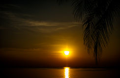Sunset coconut tree 3 Stock Photography