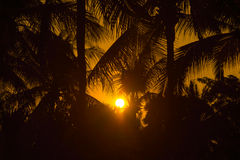 Sunset at coconut tree Stock Images