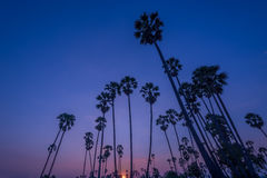 Sunset with coconut tree Stock Image