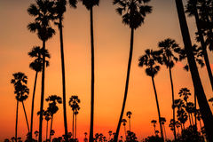 Sunset with coconut tree Royalty Free Stock Photos