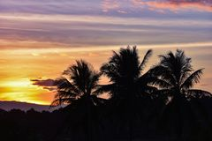 Sunset coconut tree. Sky beautiful Orange Silhouettes Royalty Free Stock Photography