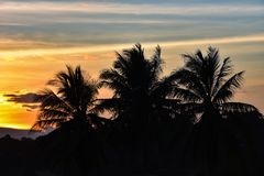 Sunset coconut tree. Sky beautiful Orange Silhouettes Royalty Free Stock Image