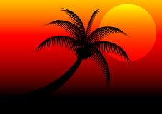 Sunset and coconut tree Stock Image