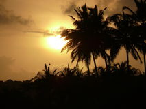 Sunset. And Coconut trees at beach Royalty Free Stock Images