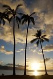 Sunset through the coconut trees on the coast of Hale& x27;iwa Beach. Park along the Pacific Ocean on the North Shore of Oahu Royalty Free Stock Photos