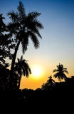 Sunset. Coconut trees at in the evening scenes Royalty Free Stock Image