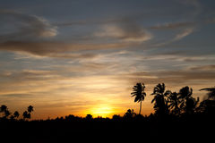 Sunset with coconut trees Royalty Free Stock Photography