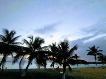 Sunset Through The Coconut Trees stock photo