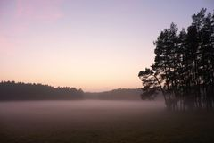 After sunset. Cold with mist covered meadow, just tree peaks increased from fog. Stock Photo