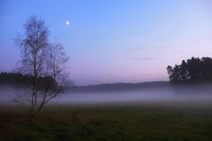After sunset. Cold with mist covered meadow, just tree peaks increased from fog. Stock Photography