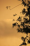 Sunset color over bamboo Royalty Free Stock Photography