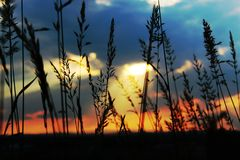Amazing background with tall plant. Sunset with colorful sky and tall plant in spring day royalty free stock images