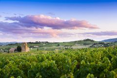 Sunset colors over vineyards of Beaujolais. In France Stock Photography