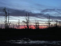 Sunset colors in swamp, Lithuania Royalty Free Stock Photos