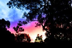 Colourful Sunset Silhouette. A sunset with colourful clouds and a silhouette of eucalyptus trees Royalty Free Stock Photo