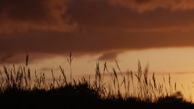 Sunset colours with focus on foreground grass sheaf Stock Photo