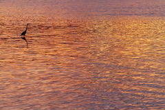 Sunset colours with heron silhouette Royalty Free Stock Photo
