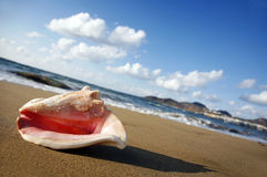 Sunset Conch Stock Photos