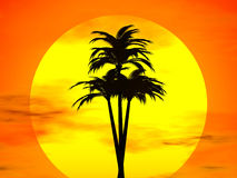 Sunset and concunut tree Royalty Free Stock Photo