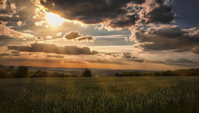 Sunset and cornfields. Cornfields with sunset as background stock images