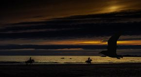 Sunset in Cornwall with horses and silhouette of a flying bird - St Ives, Cornwall. United Kingdom Stock Images