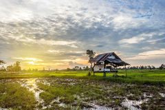 Sunset Cottage in cornfield Royalty Free Stock Photos
