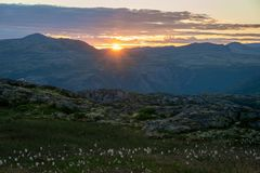 Sunset and cotton flowers in the beautofil scenic vivid norwegian mountains. stock photography