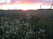 Sunset at the country side Royalty Free Stock Photography