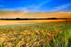 Sunset in the countryside Royalty Free Stock Photography