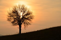 Sunset At The Countryside. Landscape image with tree silhouette at sunset Stock Images